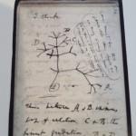 ダーウィンの「I think」ノート